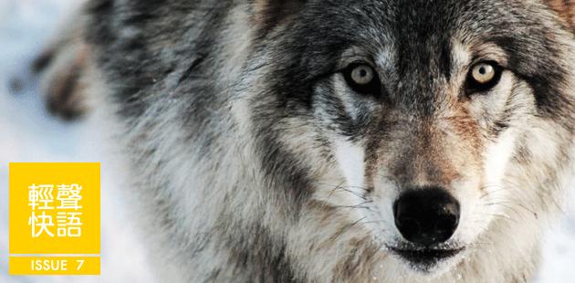 西顿动物故事-狼王洛波1
