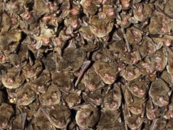 Colony-of-Bats-777x583.jpg