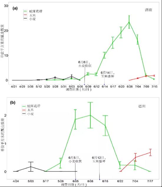 在山东济南(a)和德州(b)试验地,小麦、蛇床花带和玉米上,瓢虫随调查时间的数量变化。