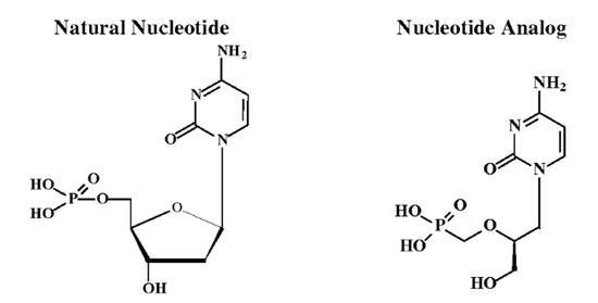 西多福韦(右)结构酷似脱氧胞苷一磷酸(左),这是它最主要的抗病毒原理(图源:参考资料)