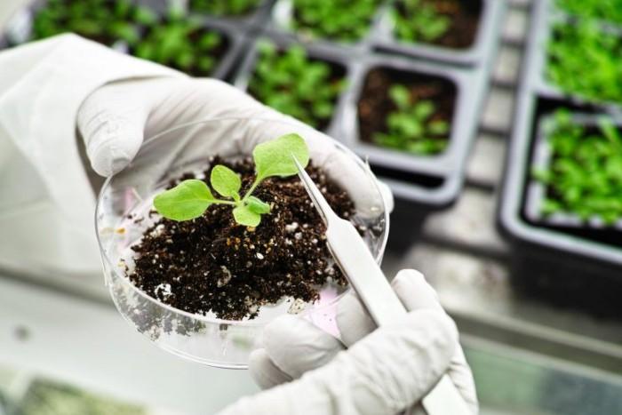 Plant-Science-Concept-777x518.jpg