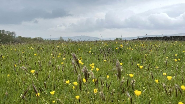 _119787096_grassland.jpg